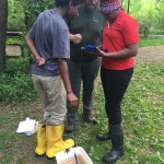 Using probeware to collect water quality information.