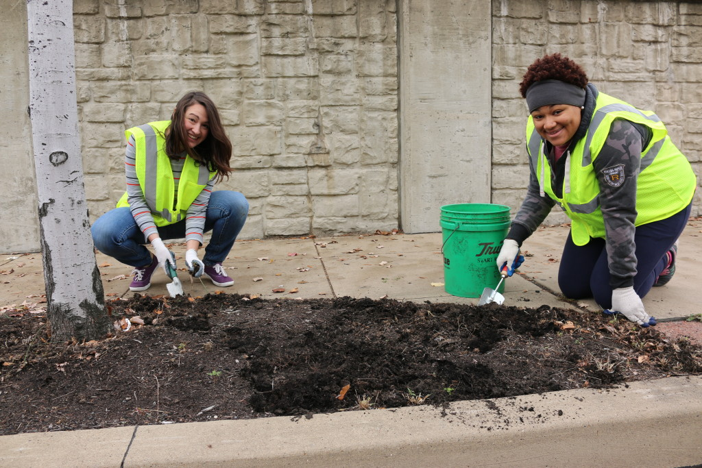 Two AmeriCorps volunteers digging for weeds.